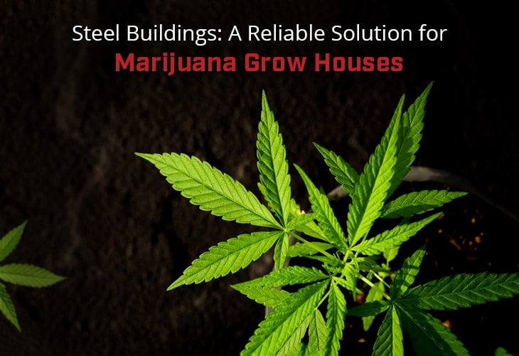 Steel Buildings: A Reliable Solution for Marijuana Grow Houses